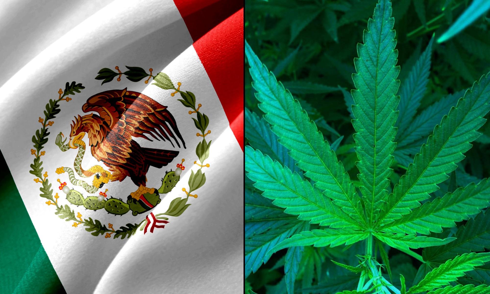 México Cannábico. El escenario está listo: la… | by Miguel Angel Tello  Vargas | Nov, 2020 | Medium